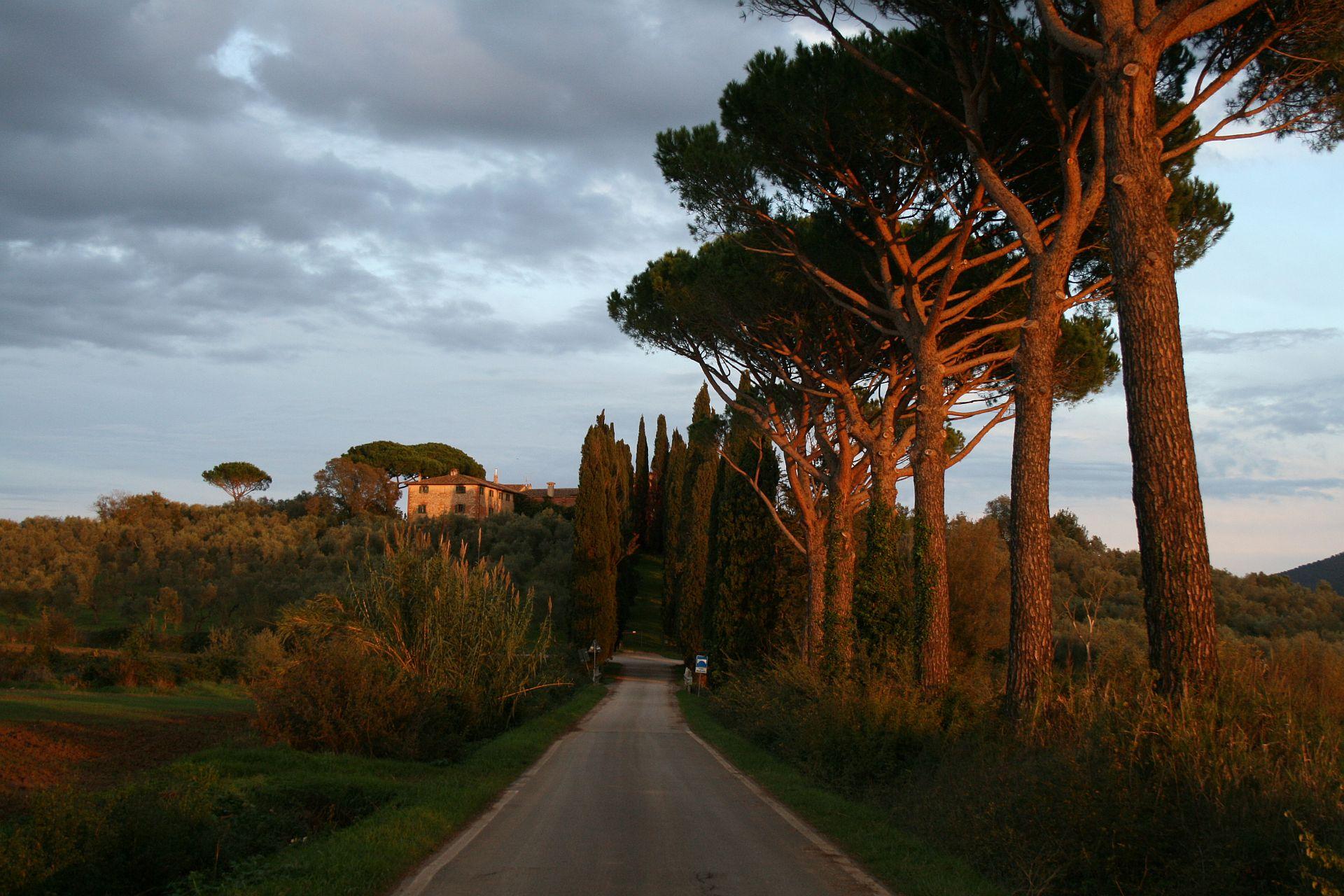 Viale dei pini per arrivare alla tenuta di montelattaia