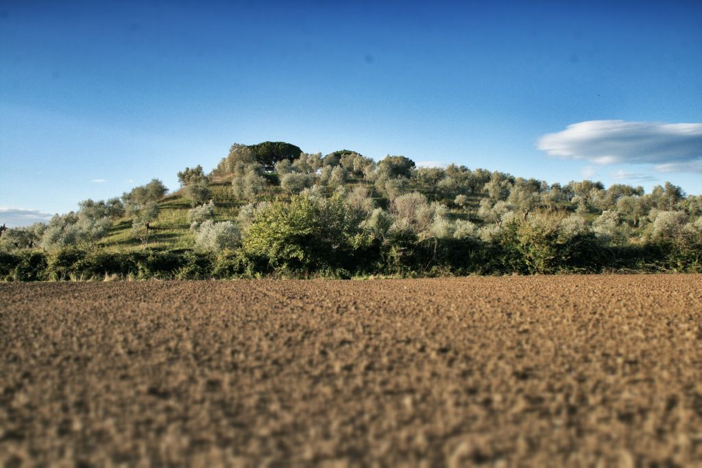 Collina di Montelattaia Tenuta Toscana sede di LeoVerde