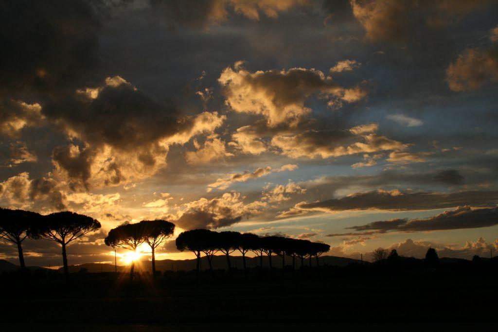 Viale dei pini della Tenuta di Montelattaia al tramonto