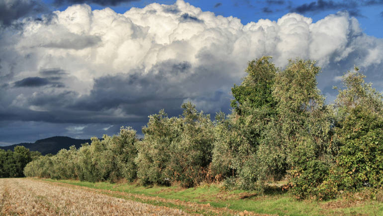 La Tenuta di Montelattaia diventa una azienda agricola Biologica